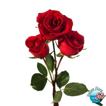 Bouquet di 3 rose a gambo corto. Consegna in Italia.