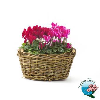Piante fiorite da interno e da esterno - Azalea pianta da interno o esterno ...