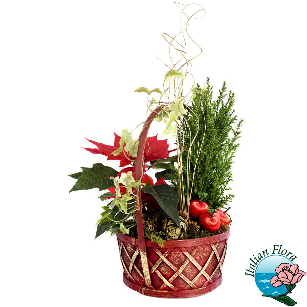 Piante Da Regalare A Pasqua composizione piante natalizie