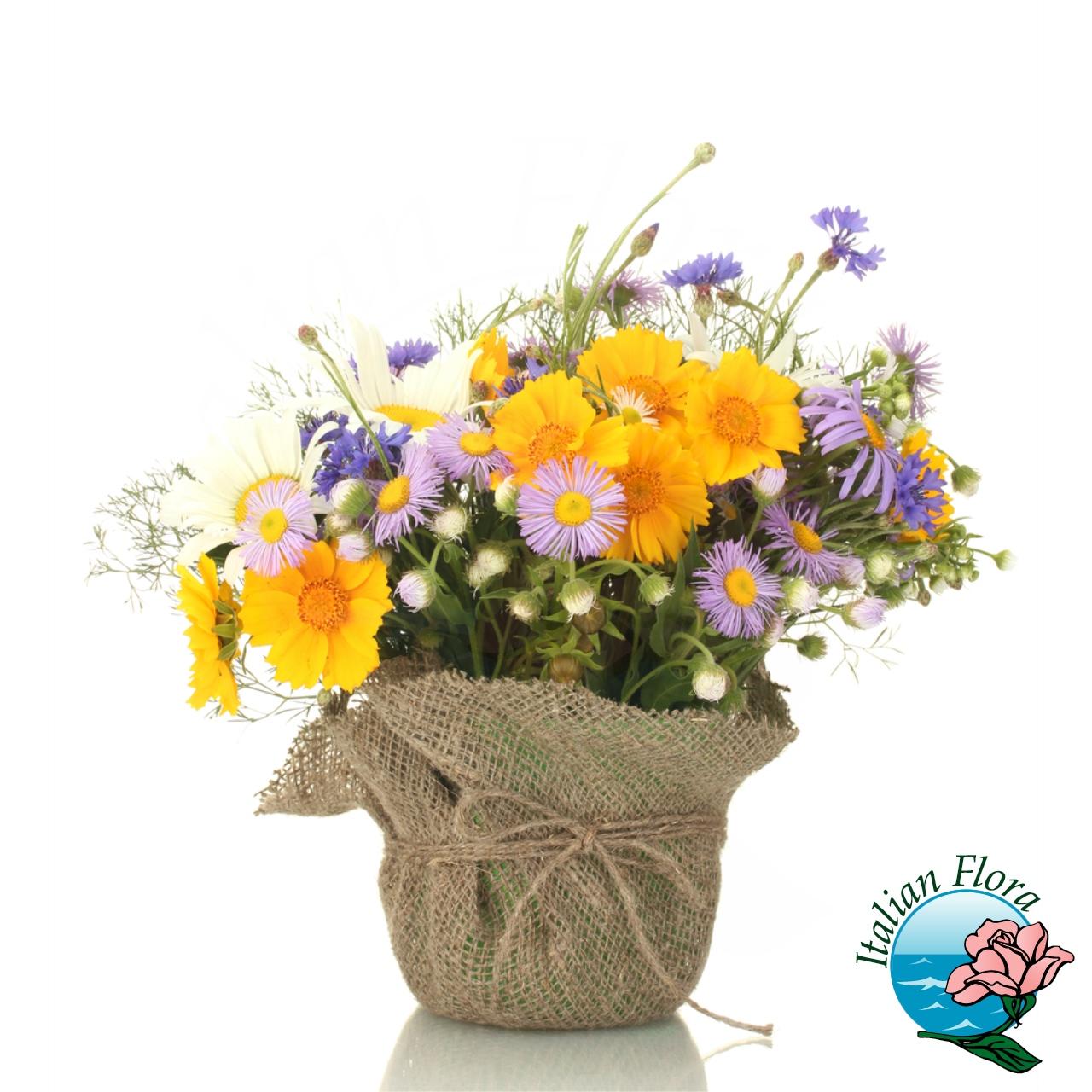 Composizione di piante di margherite for Vendita piante e fiori