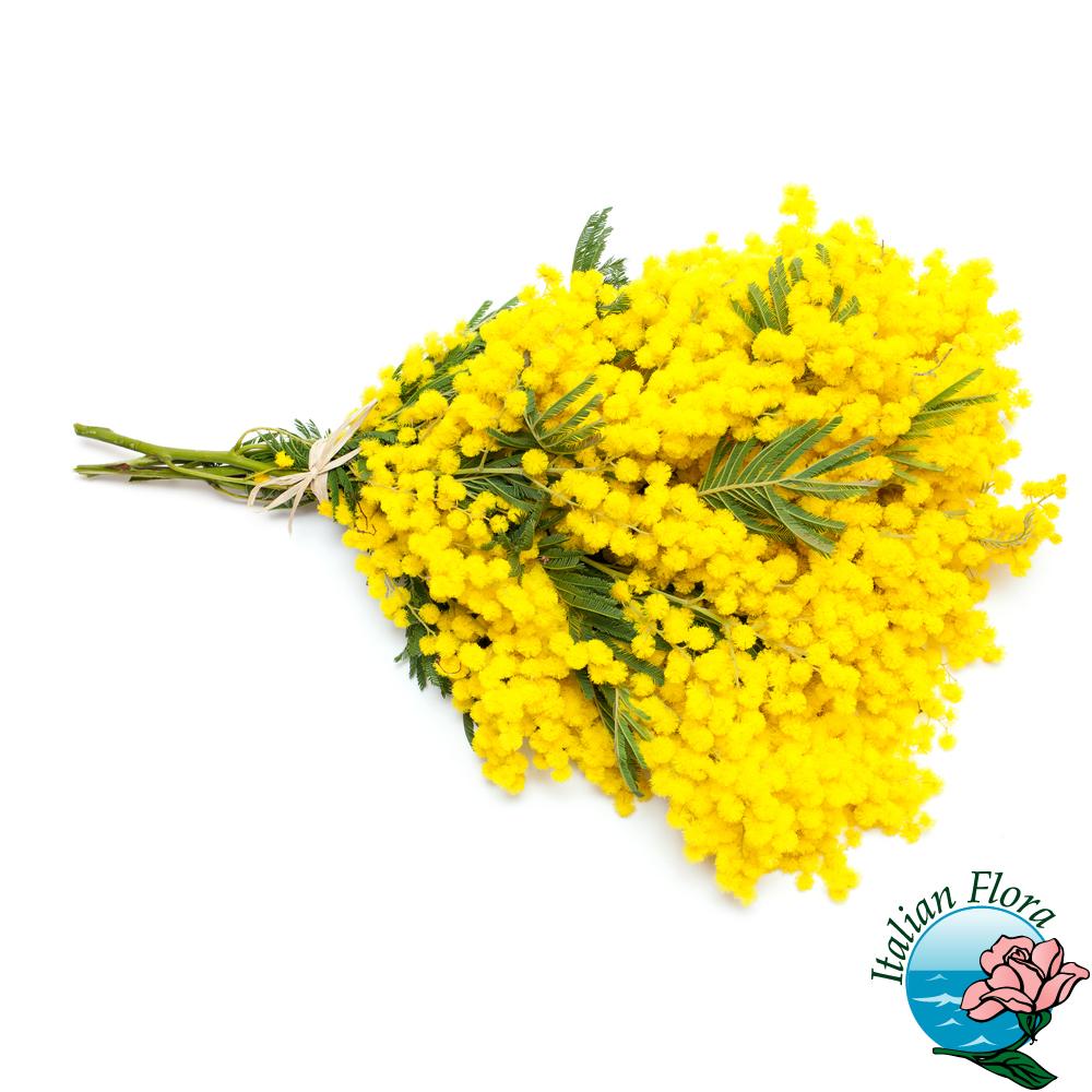 Fiori Festa Della Donna 8 Marzo Consegna Fiori A Domicilio E Mimose