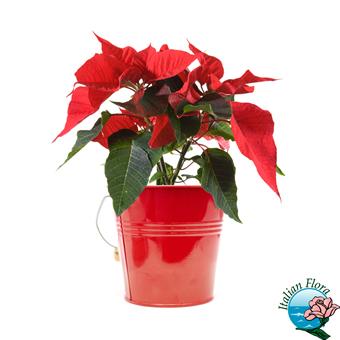 Auguri Di Buon Natale Eleganti.Frasi Auguri Natale Frasi Auguri 25 Dicembre Capodanno E Buone Feste