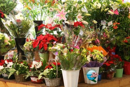 comprare fiori comprare piante fiorista acquisto piante