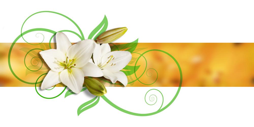 Acquisto fiori e piante on line in italia e nel mondo con for Acquisto piante e fiori on line