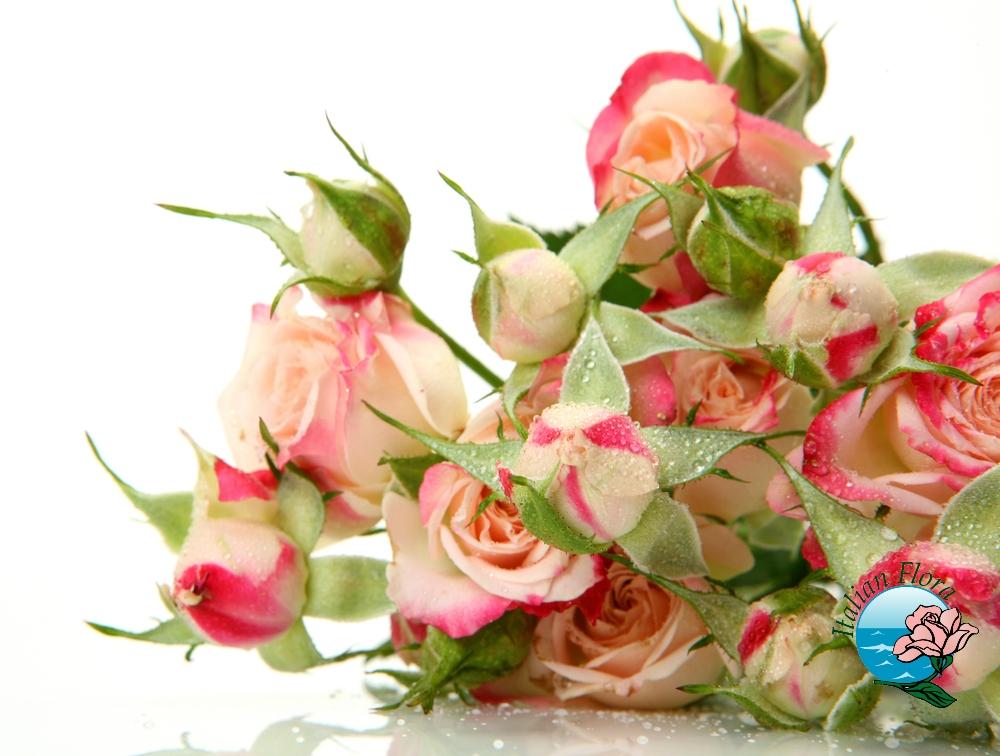 Compleanni vip febbraio compleanno personaggi famosi nati - Immagini di fiori tedeschi ...