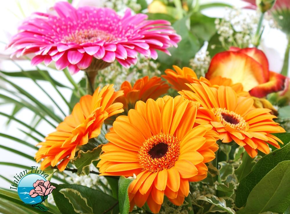 Bouquet di gerbere consegna di gerbere bianche rosa for Fiori gerbere
