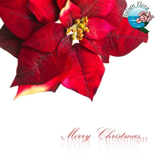 Auguri Di Natale Per La Famiglia.Frasi Auguri Natale Frasi Auguri 25 Dicembre Capodanno E Buone Feste