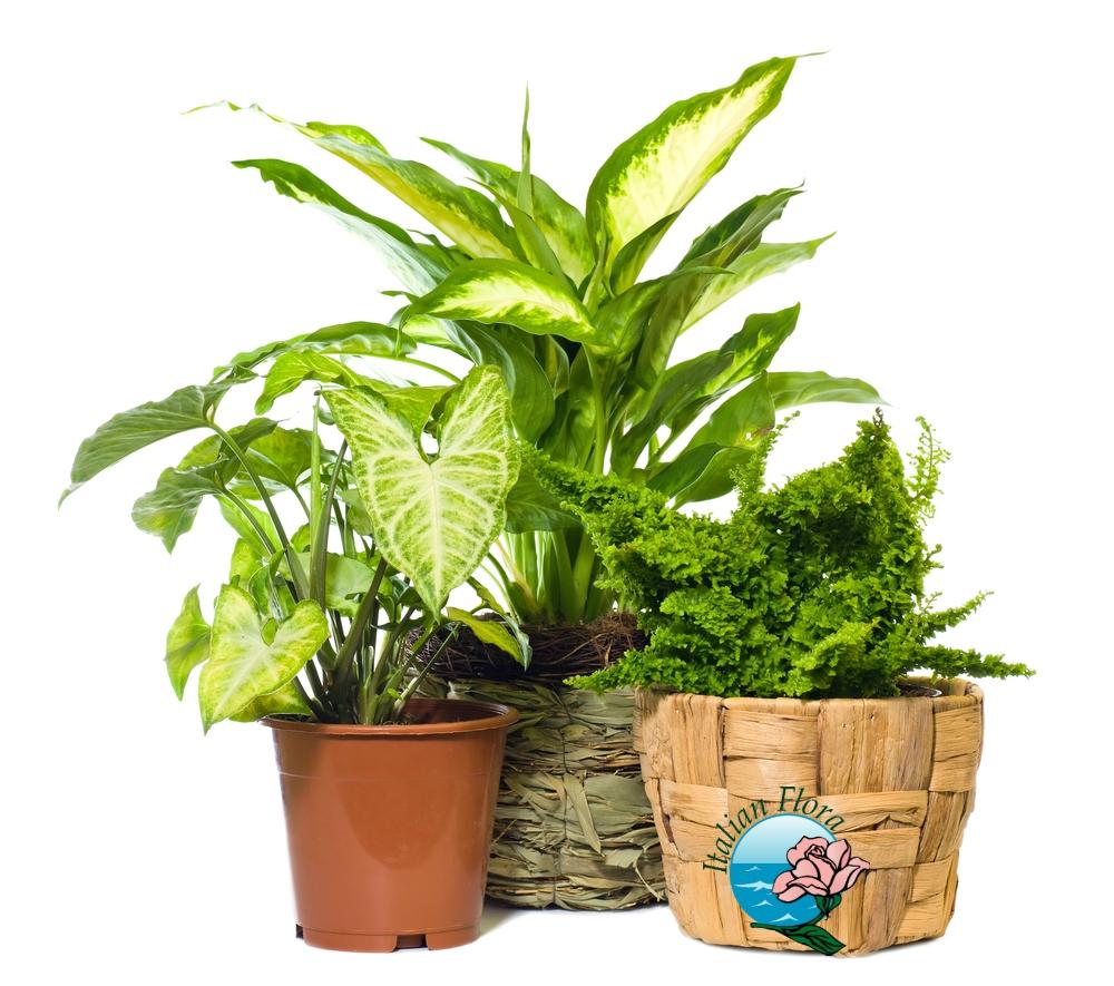 Vendita piante online, da negozio a domicilio. Prezzi bassi