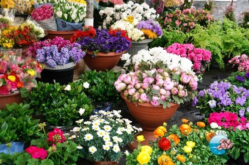 Domicilio ci italia floraqueen trento ca spedire fiori for Piante e fiori